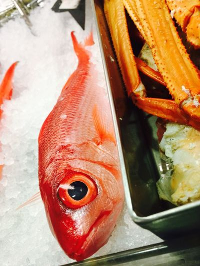 Onaga ; red snapper; good luck for the new year Fish Seafood Freshness Beautiful Onaga Red Snapper Happy New Year Good Luck Sashimi  No People Nice Catch Delicious Red Fresh Oahu, Hawaii Live,love,Hawaii Pretty Close-up Local Style Grocery Shopping