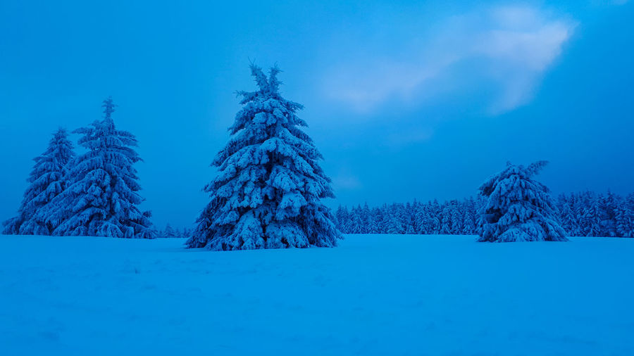 Silent winter trees during blue hour Nature_collection Nature_perfection Forest Photography Forest Winter Trees TreePorn Tree_collection  Snow Blue Hour Landscape Blue Hour Winter Wonderland Postcard Wallpaper Background Tree Snowflake Snow Frozen Water Cold Temperature Winter Forest Blue Spruce Tree Polar Climate Fir Tree Deep Snow Powder Snow Christmas Ornament