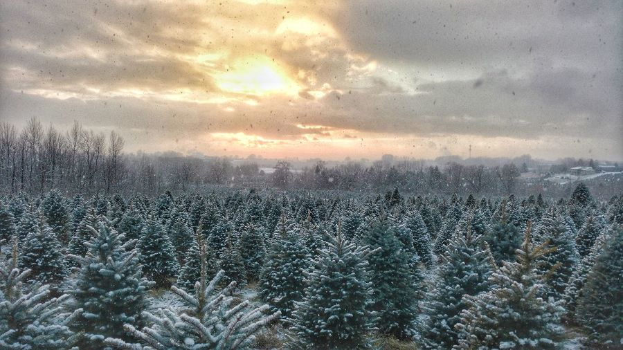 Sky Window Rain Nature Cold Temperature Outdoors Sunset Tree Scenics Beauty In Nature Snow Christmas Tree Tree Farm Winter Wonderland