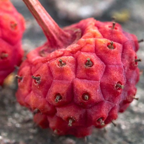 Macro Exotic Berry Fruit Foodgasm Foodie Food Flora Texture Nature Fruit Red Close-up Food And Drink Flower Head