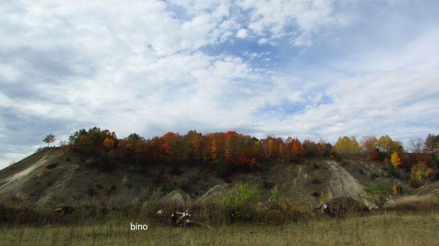 Autumn Trees Landscape My Neighborhood At The Top Of The Mountain Cool_capture_ Clouds And Sky Cadillac Michigan