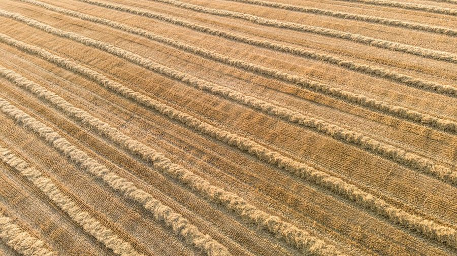 Harvested Harvest Crop  Golden Color Lines Drone Photography High Angle View Cultivated Seed Grass EyeEm Selects Nature EyeEm Nature Lover Wheat Field Wheat Harvest Time EyeEm Gallery Rural Scene Backgrounds Agriculture Pattern Textured  Field Landscape Farmland