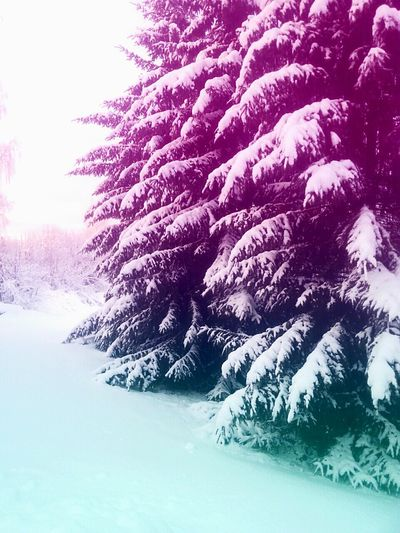 ❄ Winter Wonderland❄ Finland Cold Winter ❄⛄