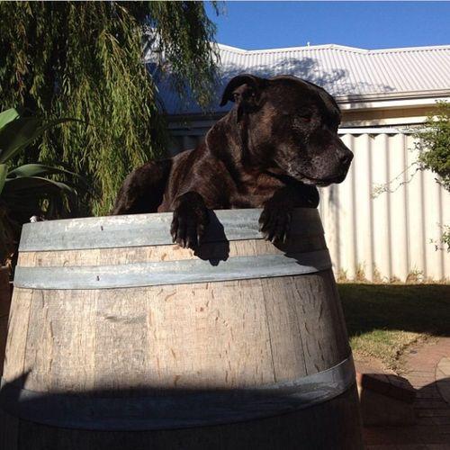 My Fur Baby I Love My Dog Wine Barrels Poochies