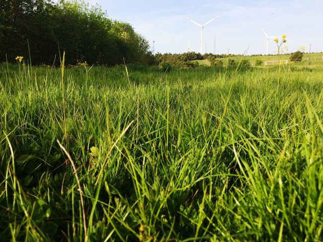 Alternative Energy Environmental Conservation Fuel And Power Generation Wind Turbine Renewable Energy Field Wind Power Grass Windmill Nature Growth Green Color No People Agriculture Beauty In Nature Landscape Industrial Windmill Day Outdoors