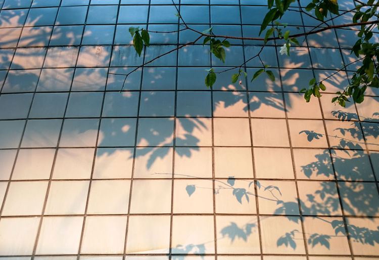 Architecture Botany Building Exterior Built Structure Day Effect Environment Geometric Shape Green House Effect Grid Low Angle View Nature Old Outdoors Plant Reflection Shade Shadow Shadows & Lights Square Sunlight Tree Urban Wall White