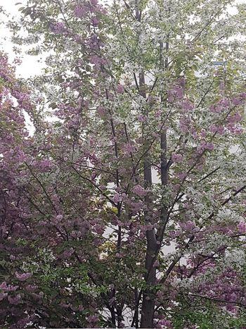 2 arbres en un..... Tree Nature Beauty In Nature
