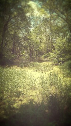 Swamp found along the hiking trail. Nature_collection Landscape_collection EyeEmNatureLover No People Countrylife Close By Home Landscape EyeEm Gallery EyeEm Best Shots - Nature Day Naturelovers Tranquility Beauty In Nature EyeEm Nature Lover Sunlight Backgrounds Outdoors Beauty In Nature
