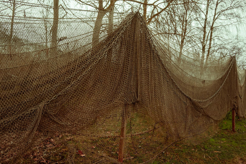 Fishing Net Forgotten Hanging Work Bare Tree Beauty In Nature Day Fisher Man Fisherman Fishing Forest Nature Net Network No People Old Outdoors Tree Witch