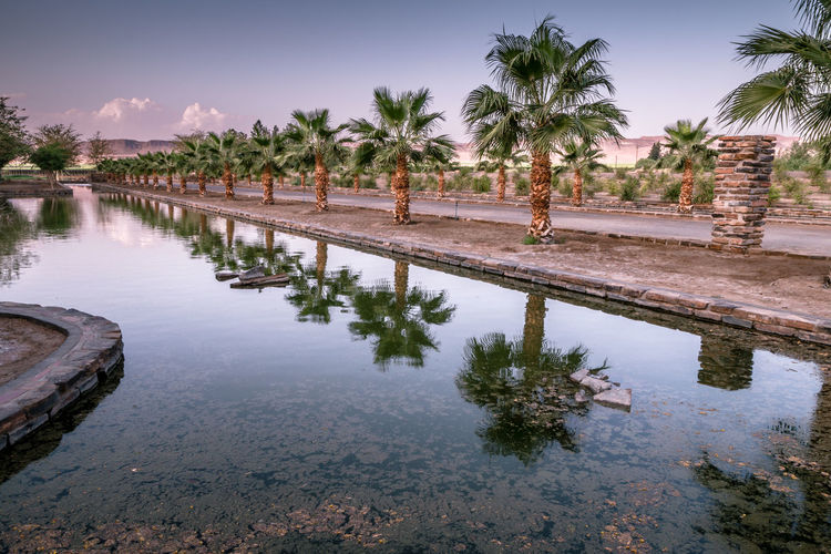 Reflection of palm trees in swimming pool against sky