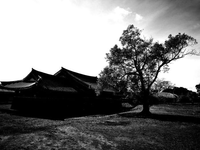 Outdoors Traditional Traditional Village Seongeup Folk Village Korean Traditional Architecture Leica Black And White Journey 여행 First Eyeem Photo JEJU ISLAND  제주도 Leica Huawei P9 Travel Forest Photography