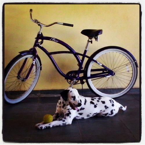 dogbike Punkbike Punk
