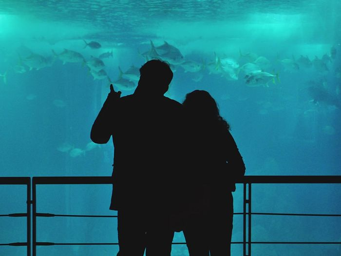 Lisboa Aquarium Water Blue People The Tourist People Photography People Watching Open Edit Couple Tourists Silhouette Lisbon Lisboa Portugal Fish Showcase: February