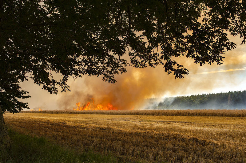 On fire Agriculture Burning EyeEm Best Shots Farm Flame Food And Drink RISK Beauty In Nature Cloud - Sky Corn Danger Field Fire Forest Growth Heat Landscape No People Outdoors Photography Savetheplanet Sky Tree