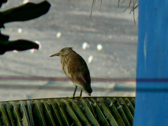 Bird One Animal Animal Themes Perching Animals In The Wild Animal Wildlife Day No People Outdoors Nature Close-up