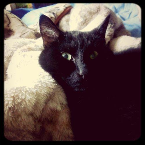 Chernyshevski the cat My Pets