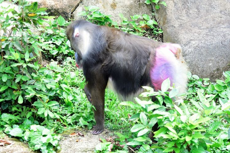 Wildlife and forestry Animal Animal Themes Animal Wildlife Animals In The Wild Day Domestic Domestic Animals Green Color Growth Leaf Mammal Monkey Mouth Open Nature No People One Animal Outdoors Pets Plant Plant Part Primate Vertebrate