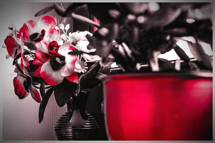 Hello World Bad Langensalza Relaxing Sunshine From My Window Flowers Colorful :-) Abstractions In Colors Redlight