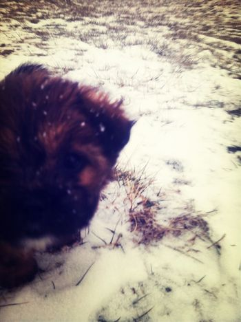 Bella playing in the snow. ❄⛄