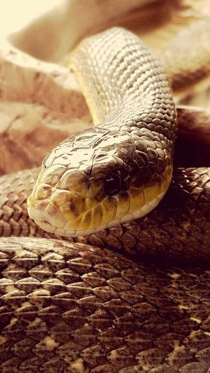 One Animal Reptile Animal Themes Animals In The Wild Close-up Animal Wildlife No People Nature Outdoors Day Animal Scale