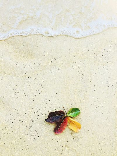 High angle view of insect on sand