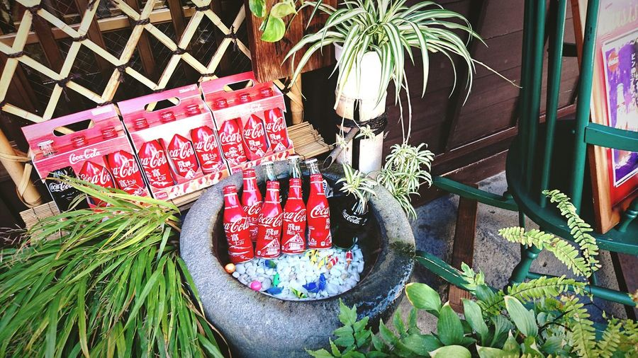 Red Color Green Color Bevarage Drink Cocacola Travel Photography Japan Photography For Sale Display Plant Life Shop