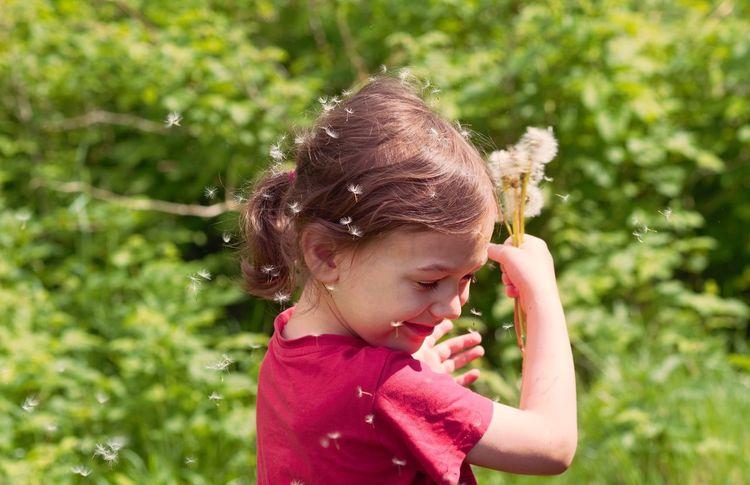 Dandelion Joy Sow Thistle Child Childhood Smiling Happiness Motion Summer