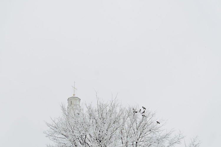 Sky Tree Copy Space Clear Sky Bare Tree Nature Low Angle View Plant Cold Temperature No People Architecture Built Structure Building Exterior Winter Branch Day Snow Place Of Worship Religion Outdoors Spire