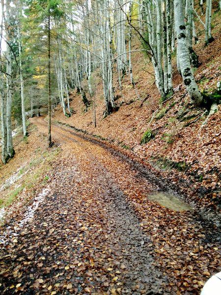 Little road in mountain Autumn Colors Mountain Sauris
