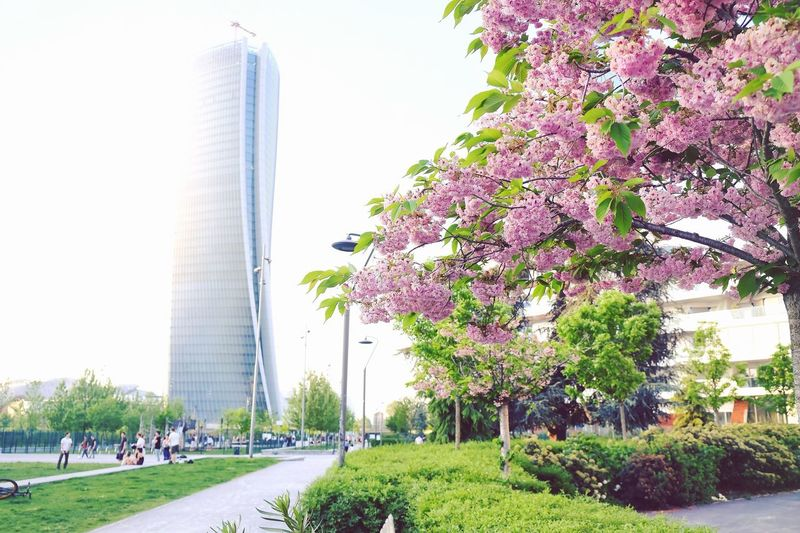 Milano Prmavera Wonderful Amazing Skyline Photography Italy Milan Spring Milano Plant Architecture Built Structure Tree Building Exterior City Sky Nature Day Travel Destinations Outdoors Incidental People Office Building Exterior Flower Building Beauty In Nature Flowering Plant Skyscraper Travel Adventures In The City Adventures In The City