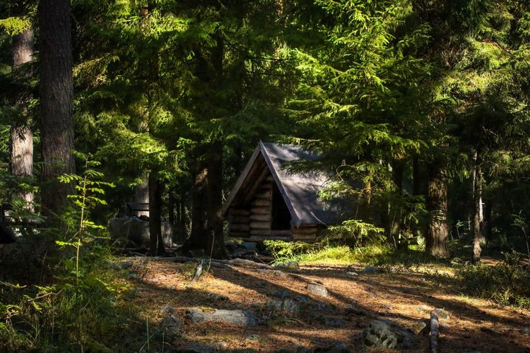 Forest Greenery Forest Photography Forest Skog Skogen Mysigt Cozy Stuga WoodLand Woods Sweden The True Story Sweden Autumn Höst Sweden Canon 70d Nature Photography Canon 100mm Canon Nature Flowers, Nature And Beauty Green Cabin Plant Tree Sunlight Nature Growth No People Shadow