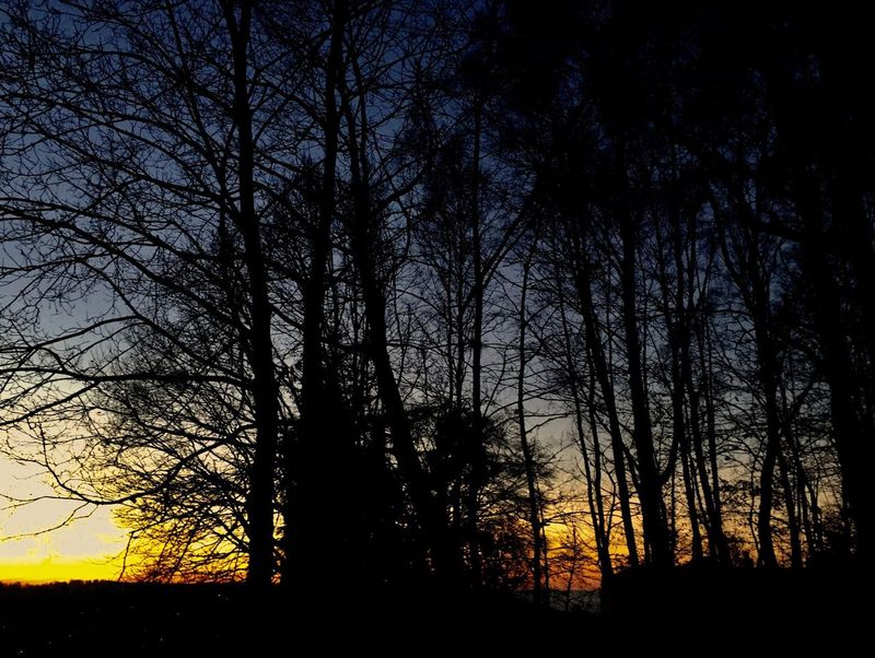 Silhouette Sunset Silhouettes EyeEm Sunset Paint The Town Yellow Nature Sunset Beauty In Nature Tranquil Scene Tranquility Scenics Bare Tree No People Sky Outdoors Branch Forest Night EyeEm EyeEm Best Shots EyeEm Gallery EyeEm Nature Lover Nature_collection Nature Photography Nature Siluet Photography