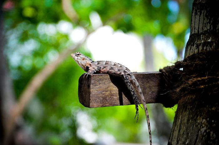Animal Photography Photooftheday Savetheplanet Maldives Tropical Nikonphotography Freelancerlife Nikon Like Wildlife Animals