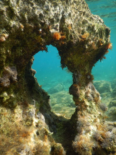 Diving Divingphotography Underwater Underwater Tunnels Colorful Corals Blue Sea Underwater Photography