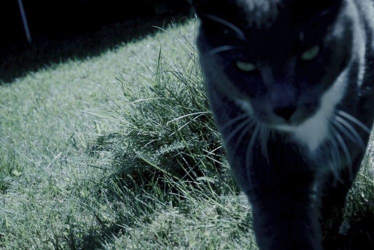 Beutiful  Image Cat Eyes