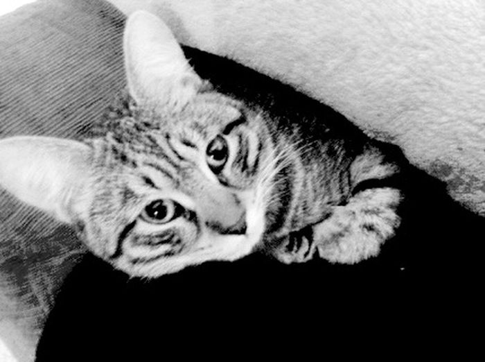 Cat Love Piuma