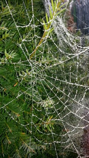 Please check out my other picks. You might also like them. Thanks 4 passing by! Spider Web Nature Fragility Close-up No People Outdoors Spider Web Draußen Nahaufnahmen Menschenleer Plant Pflanze  Wald SpinnennetzNatur Spinne Natur Frost Winter Pflanze  Beauty In Nature Schön Live For The Story