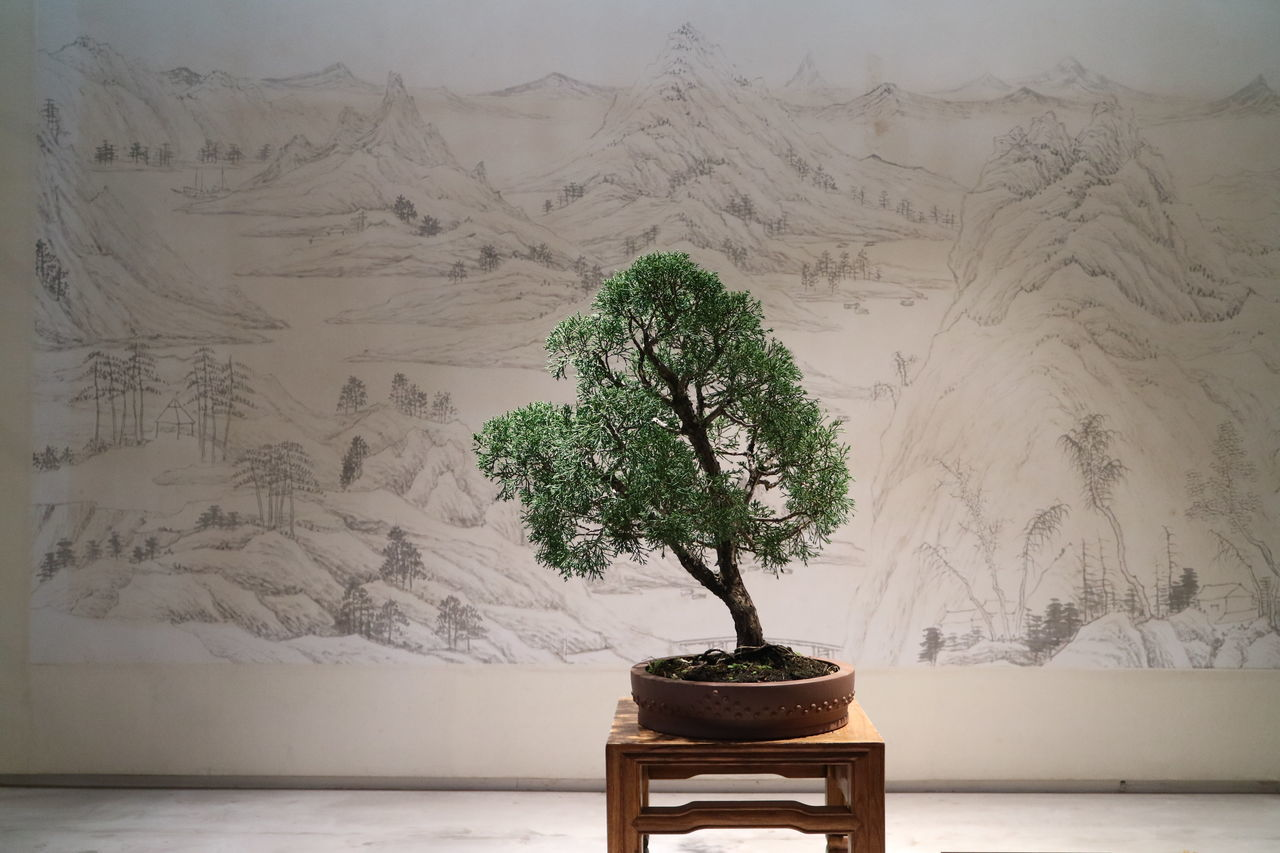 potted plant, tree, bonsai tree, table, growth, nature, no people, indoors, plant, day, beauty in nature, branch, close-up