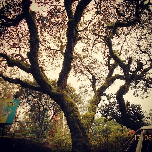 Moss Tree Nature Longdrive Green Silhouettephotography Silhouette Shorttrip