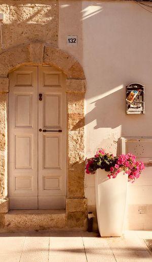 🌸 Scorci Flower #puglia #sun #door