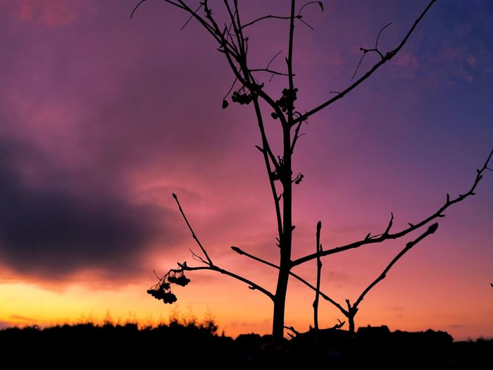 Silhouette bare tree against dramatic sky during sunset