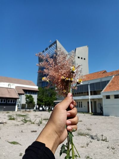 A flowers and buildings