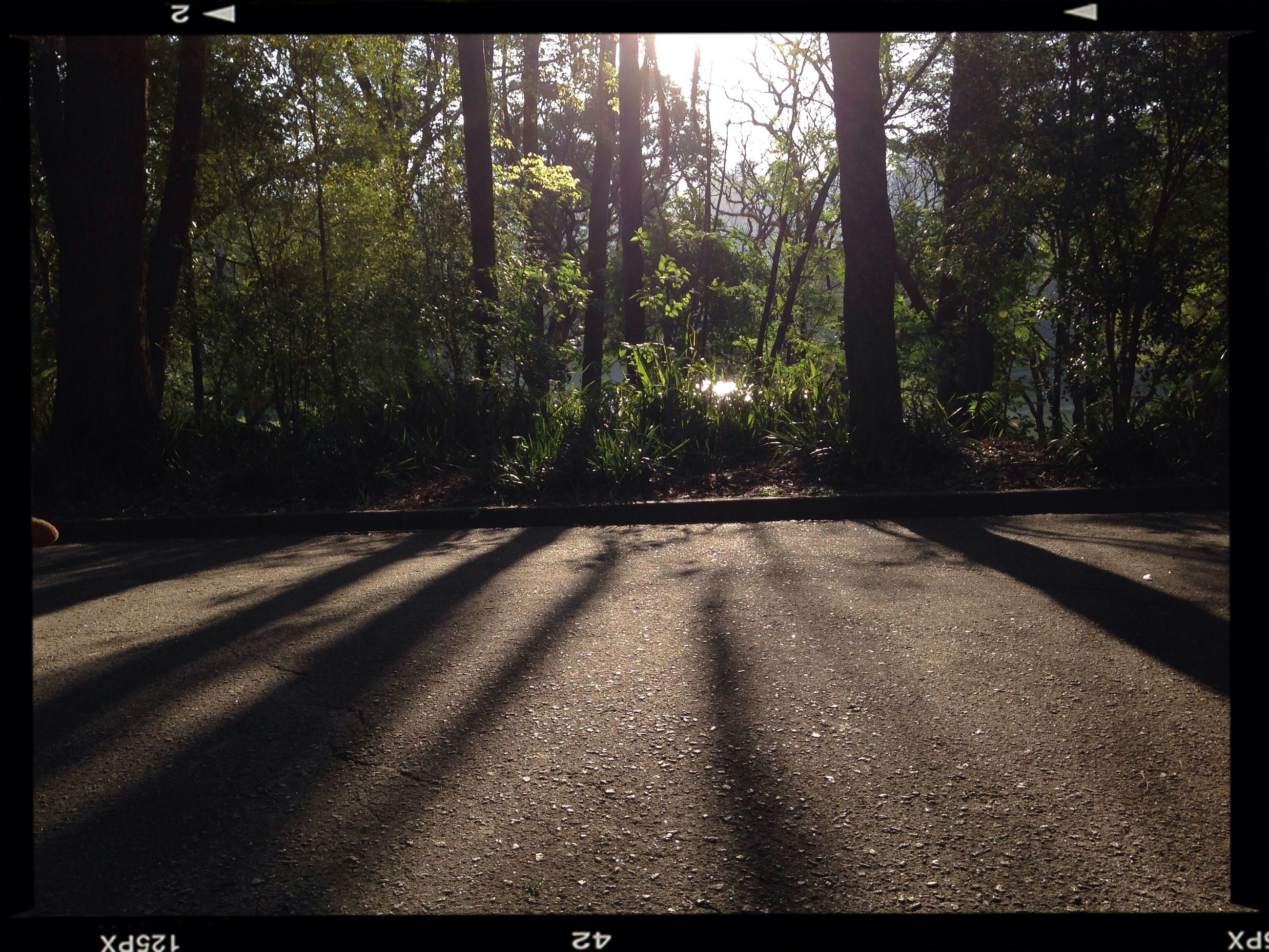 transfer print, tree, auto post production filter, the way forward, road, tranquility, forest, transportation, growth, nature, sunlight, street, no people, day, outdoors, tranquil scene, diminishing perspective, shadow, tree trunk, empty
