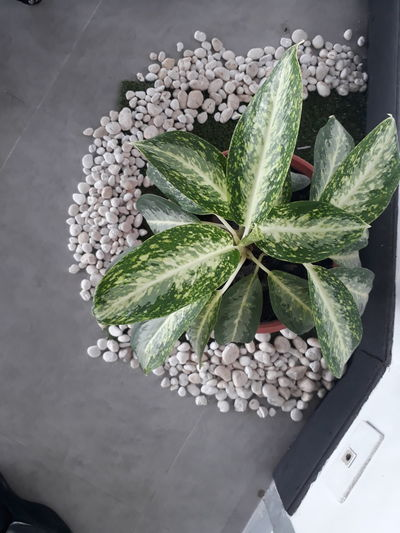 High angle view of plant in container