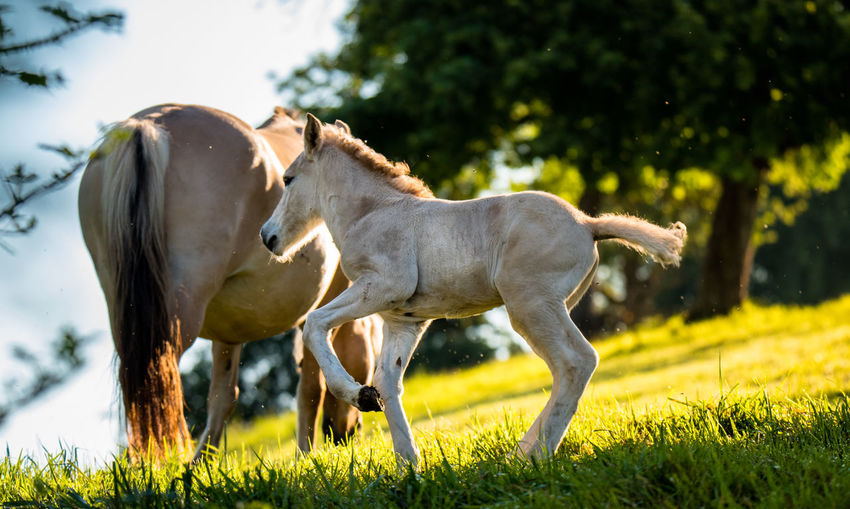 Horse and foal on grassy field