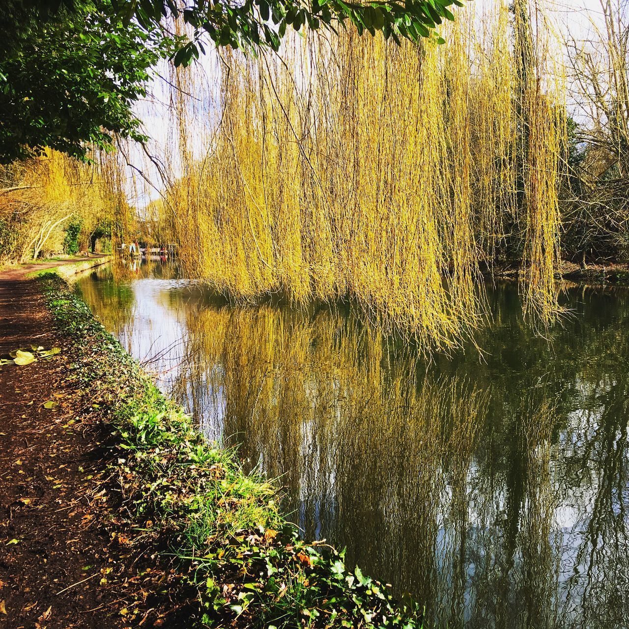 water, plant, tree, lake, tranquility, beauty in nature, growth, tranquil scene, reflection, nature, no people, scenics - nature, day, non-urban scene, green color, outdoors, forest, grass, willow tree