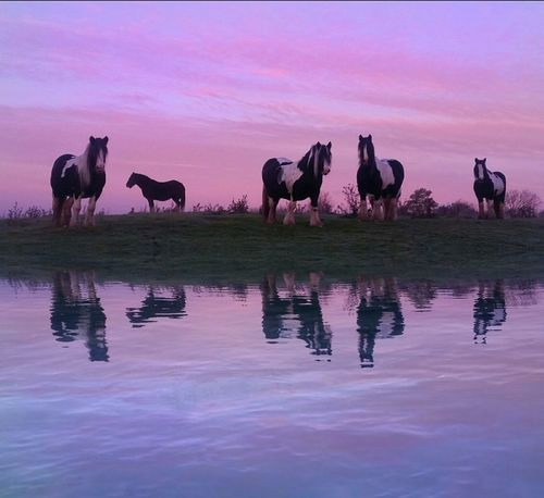 'Cart Horses on a Frosty Morning' Winter Wonderland Water Reflections Pastel Power Pastel Sky Farm Life Farmland Cart Horse Horses Horse Photography  Shire Horses Painterly Effect EyeEm Best Edits EyeEm Best Shots - Nature Eyeem Market Pink Color Exceptional Photographs Beauty In Nature EyeEm Masterclass Eye4photography  EyeEm Nature Lover Painterly Frosty Winter