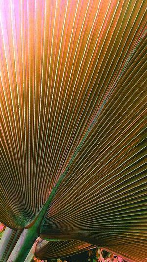 Broad Leaves Broad Leaf Leaf Leaves Leaves Color Leaves Photography Creative Color Creative Color On Leaves Orange Leaves Orange Tone Beauty Of Leaves Beautiful Leaves