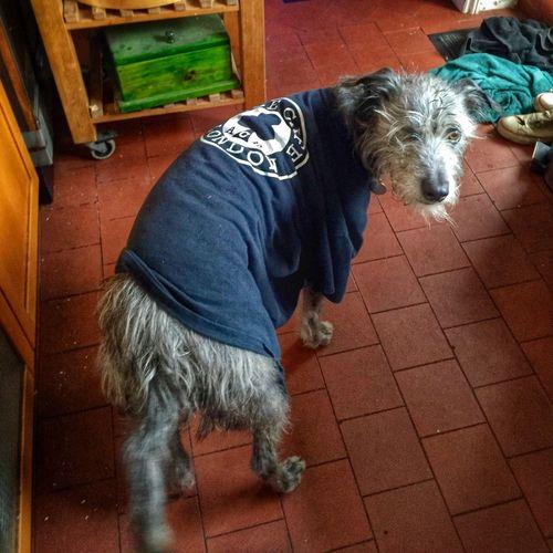 Lurcher I Love My Dog ❤ Sighthound Hampton Hill LEO... The One Eyed Lurcher... I Love My Dog Animal Photography Ace Dog! ACE CAFE Motorcycle