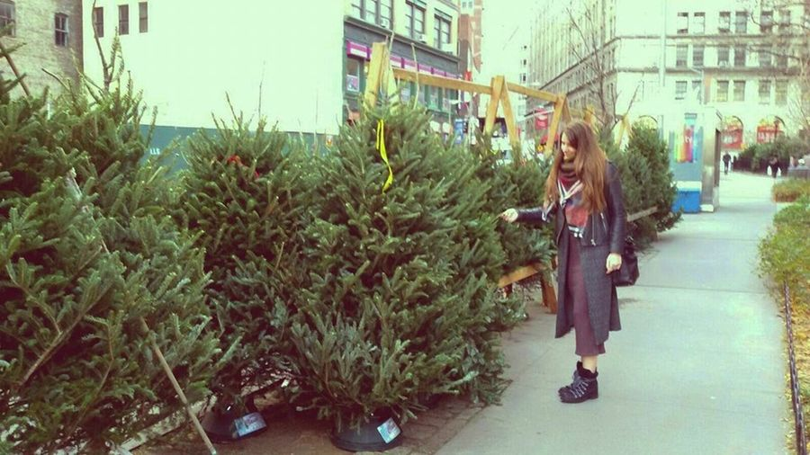 City Life City Street Holidays One Person Preperations Street Photography Tree Picking Warm Clothing Young Adult